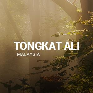 Business Website Design for TongkatAliPro.com